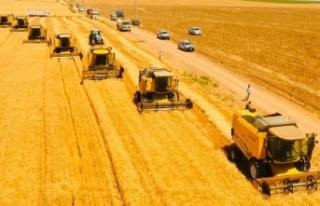 Dünyanın en büyük çiftliğinde buğday hasadı...